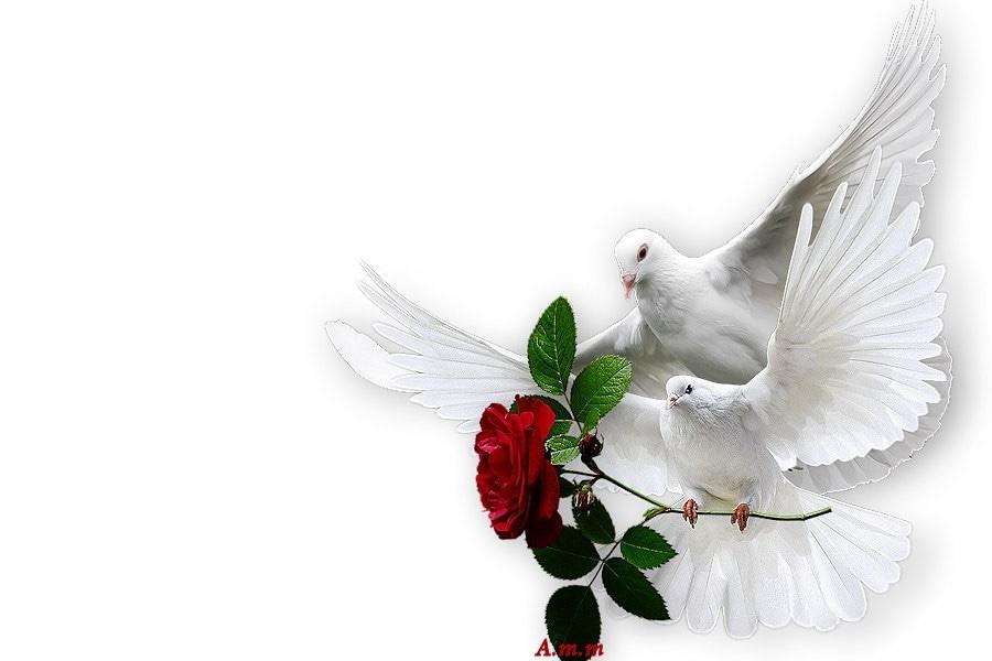 Красивая открытка голубей, картинках днем проектировщика