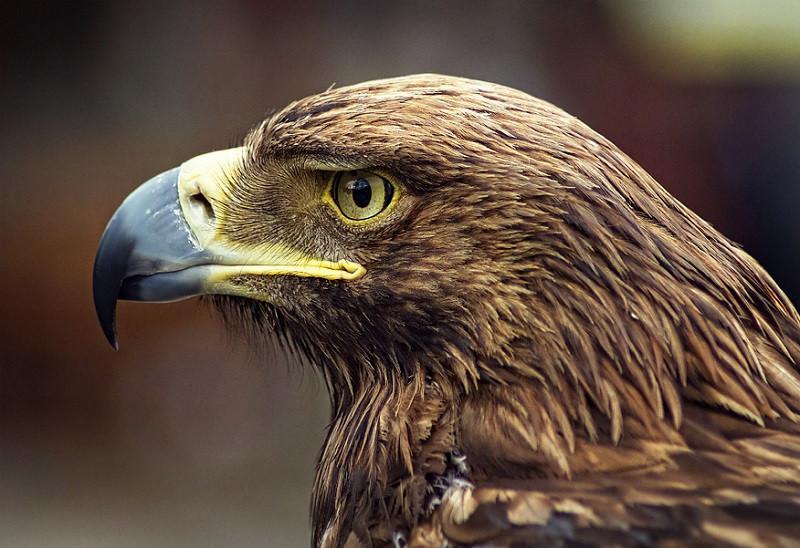 картинка орел который есть цена потолки