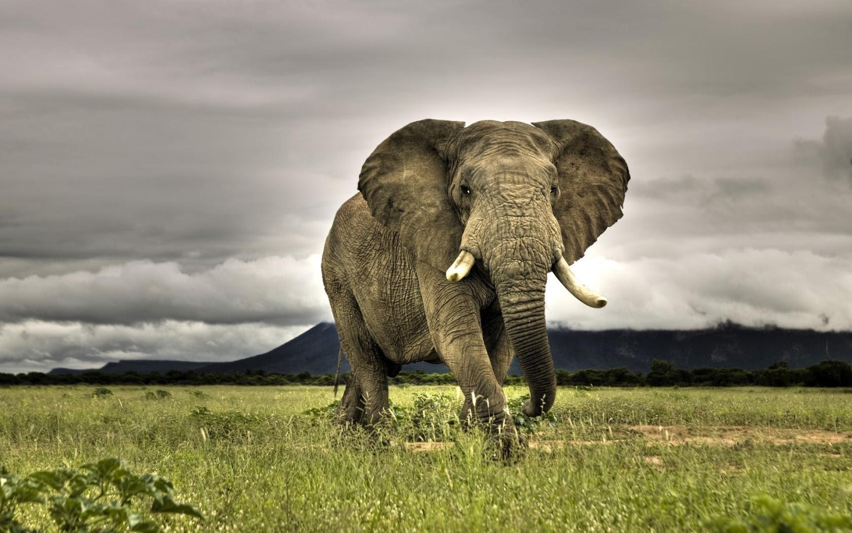 Картинки о слоне