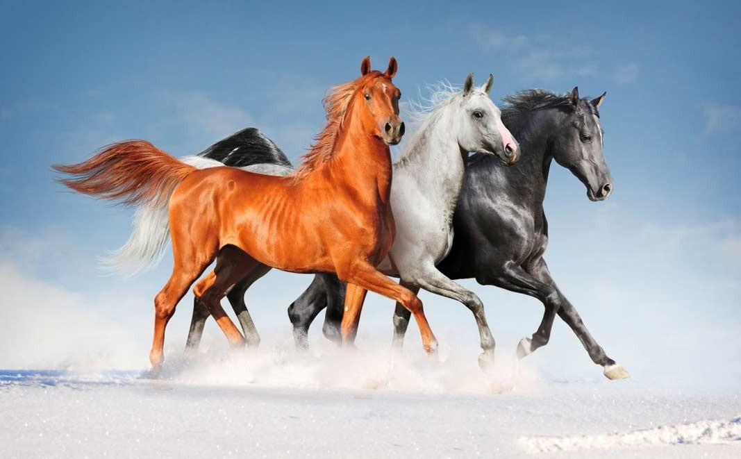 Лошади - красивые картинки (45 фото) • Прикольные картинки и позитив