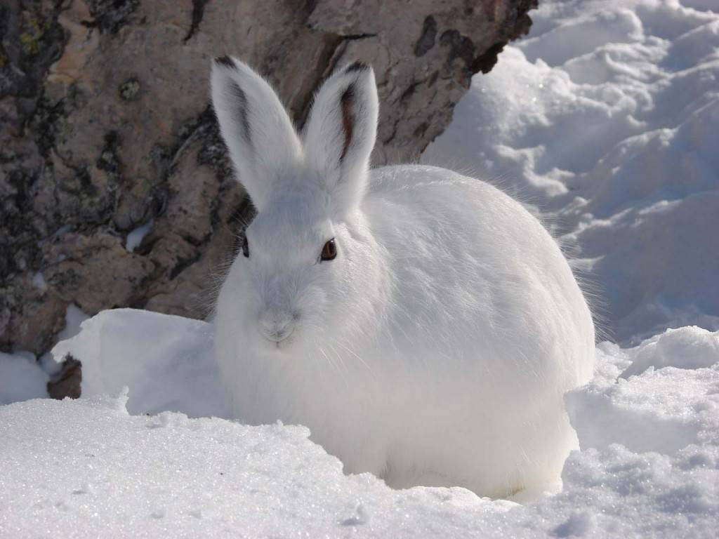 Картинка для детей заяц фото