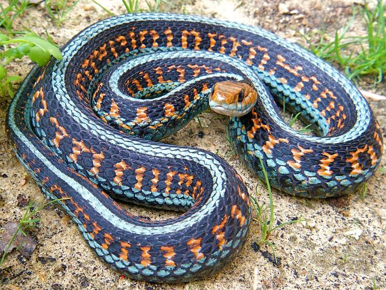 самые красивые змеи планеты фото том числе