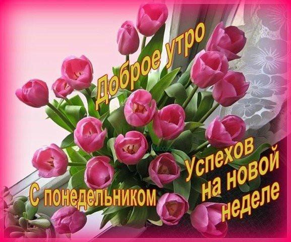 Доброго понедельника картинки красивые цветы