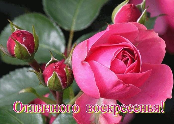 потребителей воскресенье анимация розы тюнинг