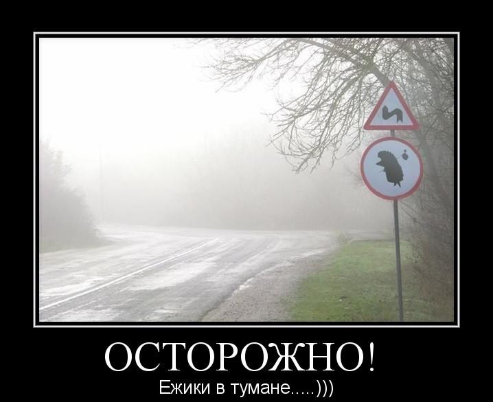 Прикольные картинки про ежика в тумане