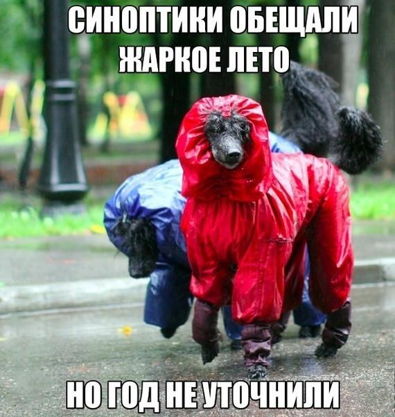 смешные картинки про холодное лето