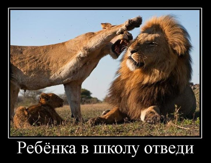 Картинки со львами прикольные с надписями