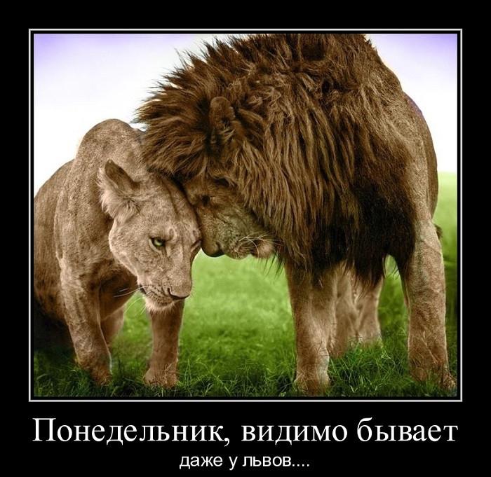 Прикольные картинки львов с надписями со смыслом, дня святого валентина