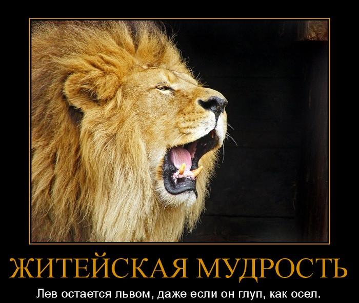 Картинки с надписью со львами