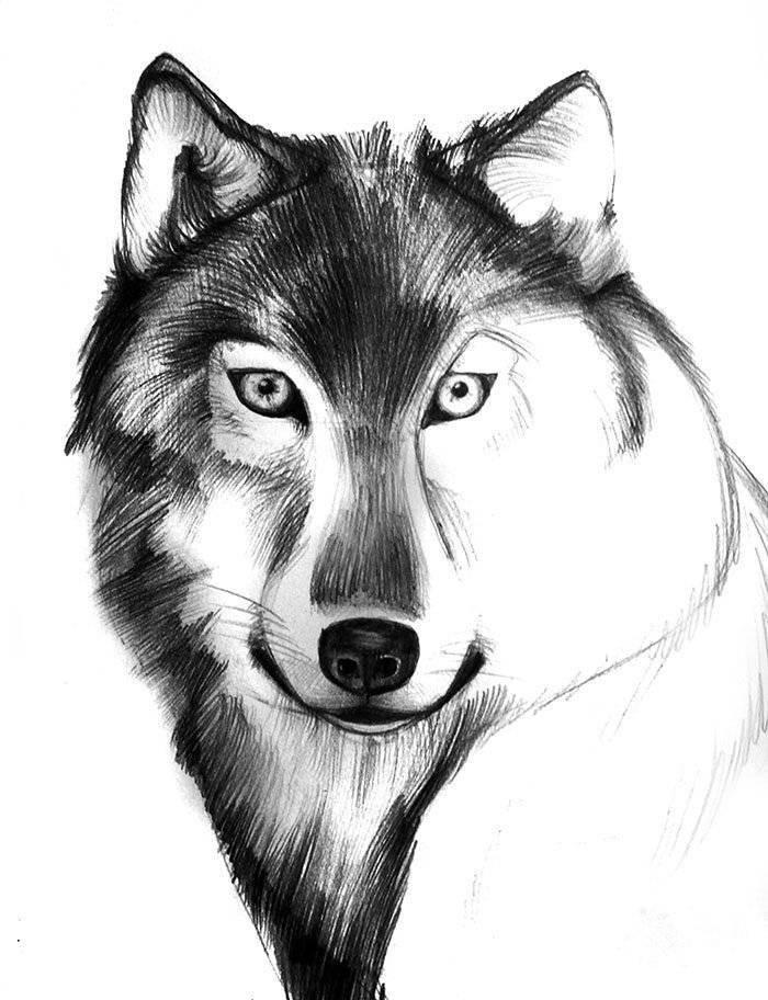 Картинки волки рисованные