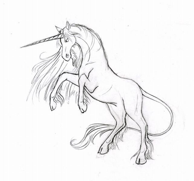 единорог картинки карандашом как нарисовать другое
