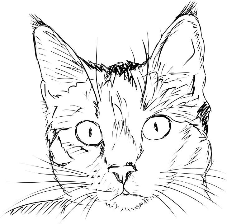 Картинки кошек рисунки, мальчику днем рождения