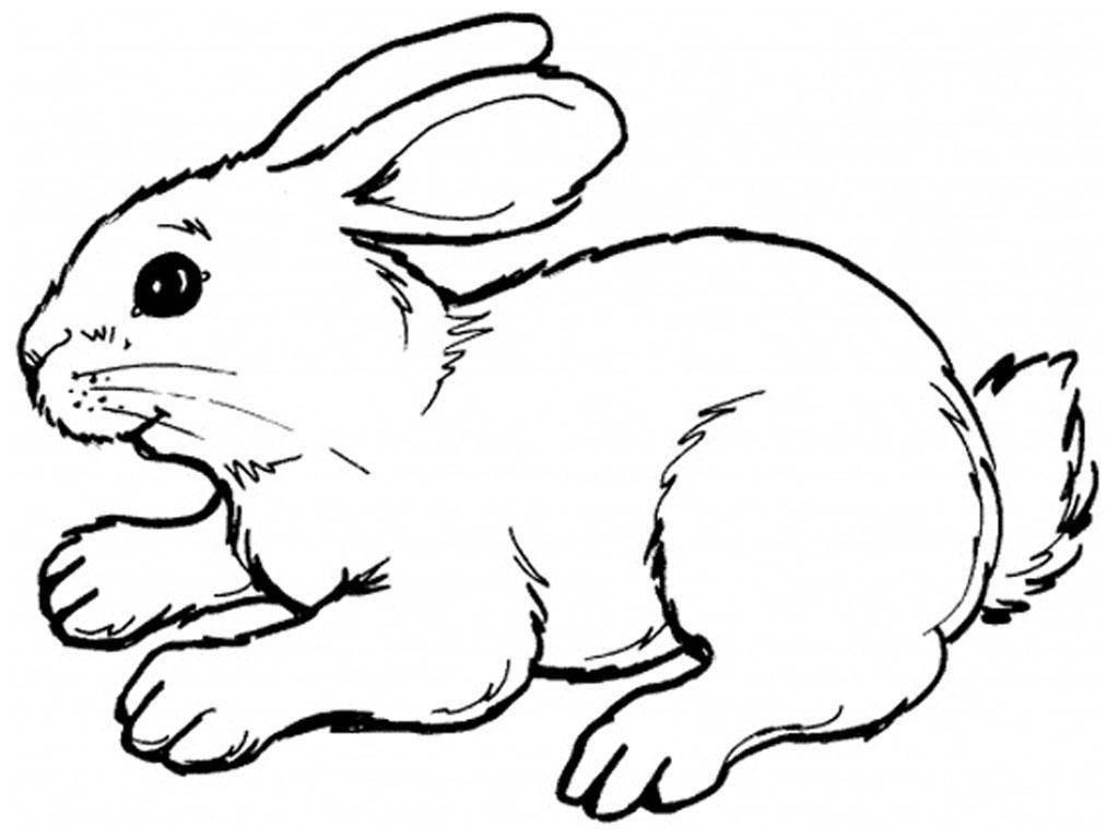любого заяц рисунок раскраска картинки используйте