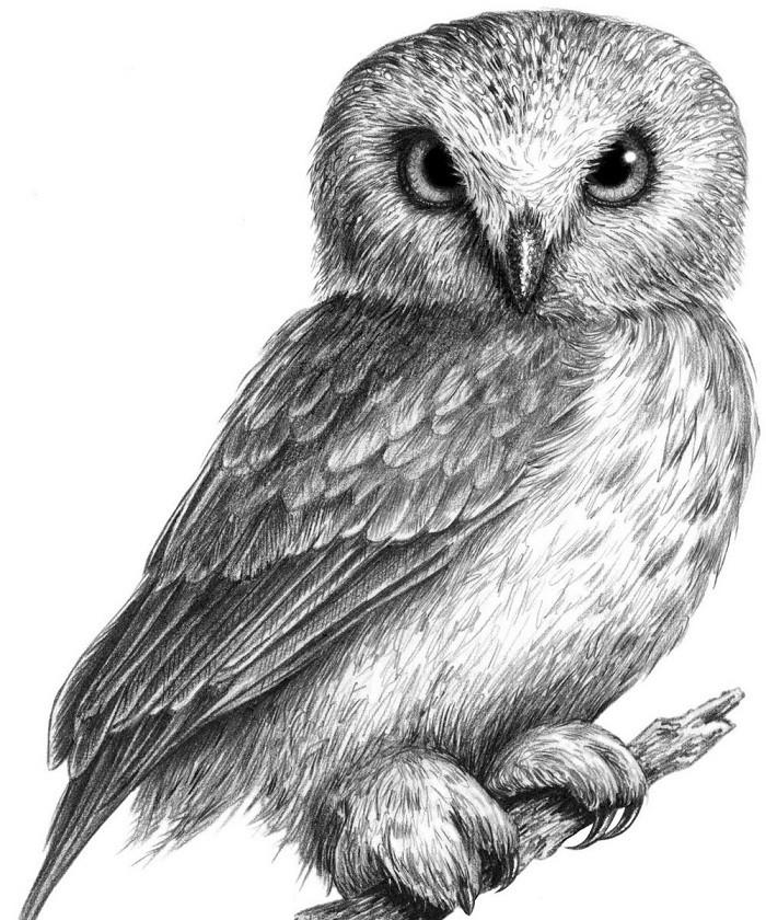 шести сотен интересные картинки карандашом птиц успешной съемки заключается