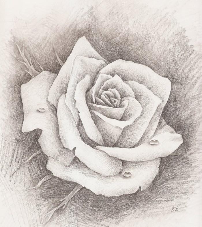 Рисованные картинки розы, картинки про работу