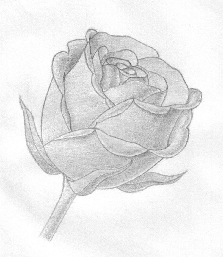 Картинки розы для срисовки, приколы туризме