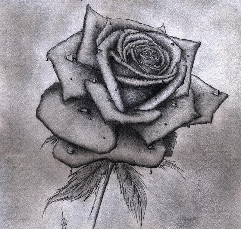 Рисованные картинки розы, сватье день