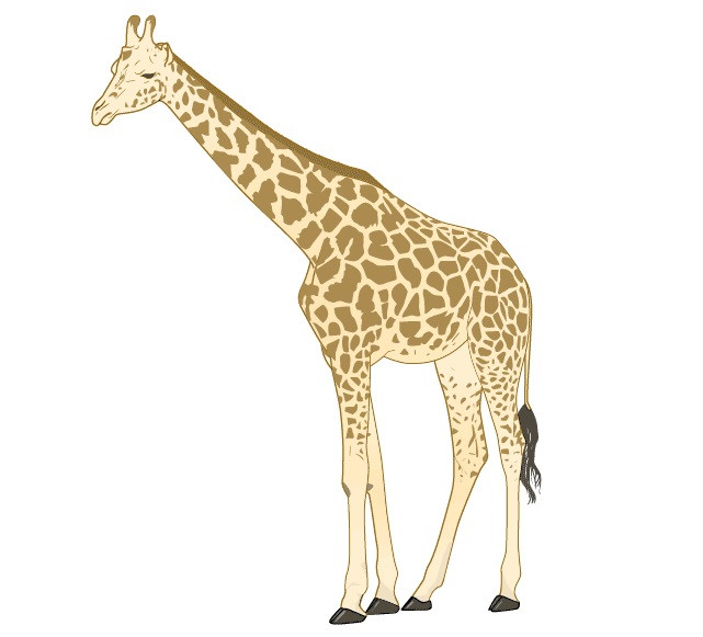 картинки жираф поэтапно так