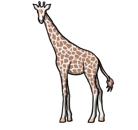 Картинка жирафа для срисовки