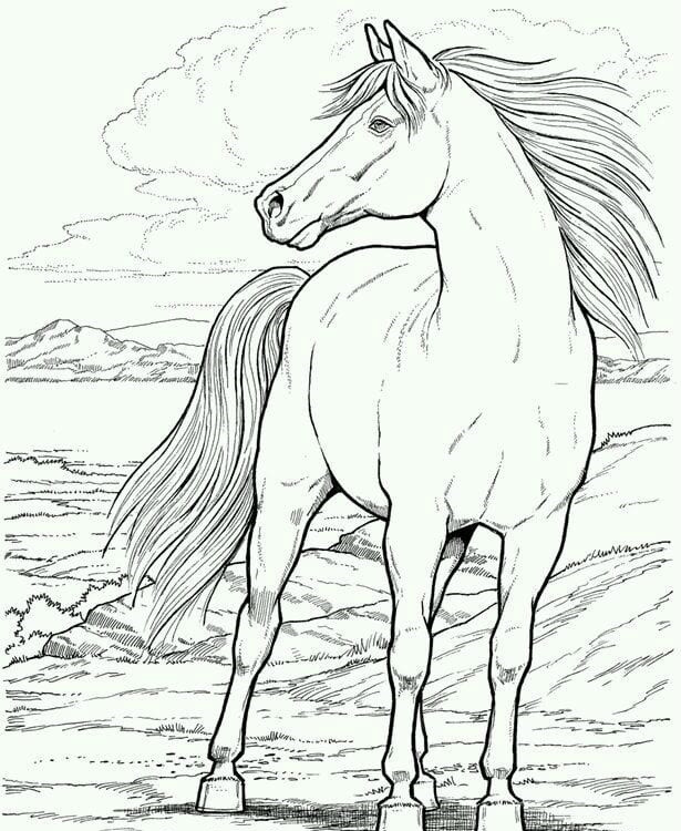 Рисунок на лошади
