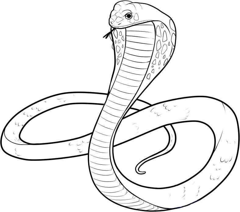 Раскраски змея распечатать