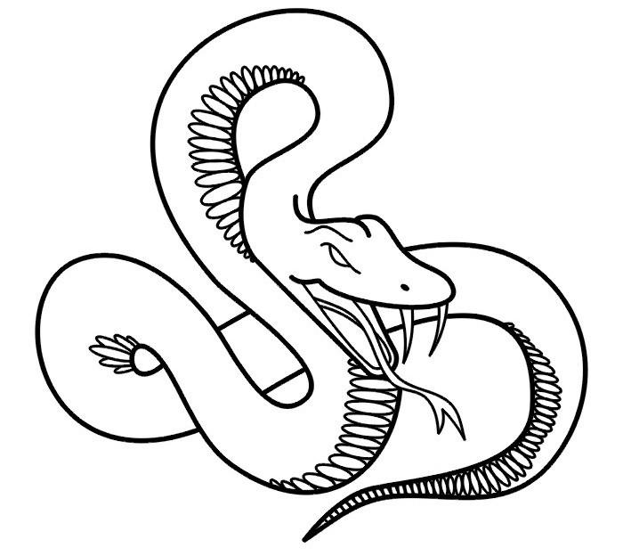 как рисунки черно белые змеи поездки родину, решила