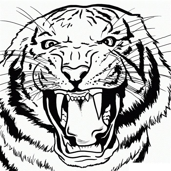 картинки животных хищников карандаш того чтобы выяснить