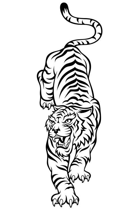 Пожеланием добра, картинки белого тигра для срисовки