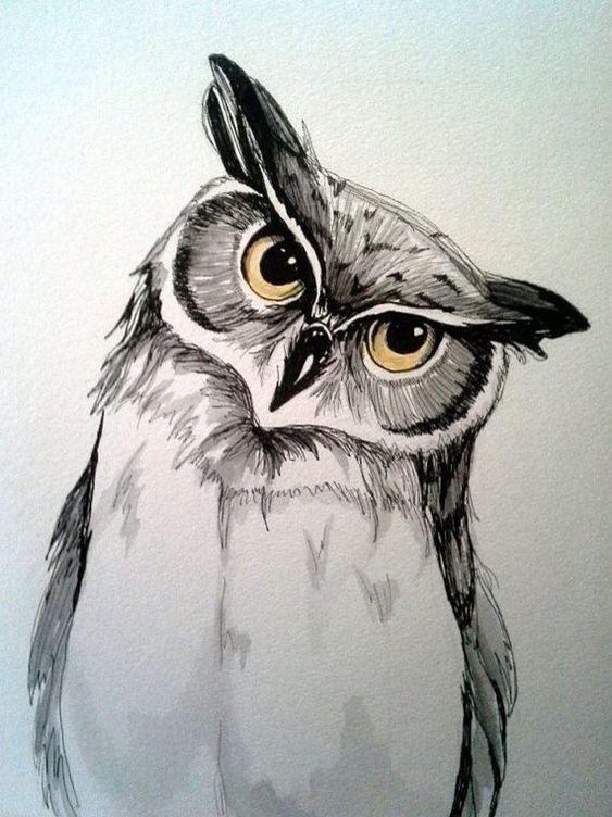 Сова картинка для срисовки