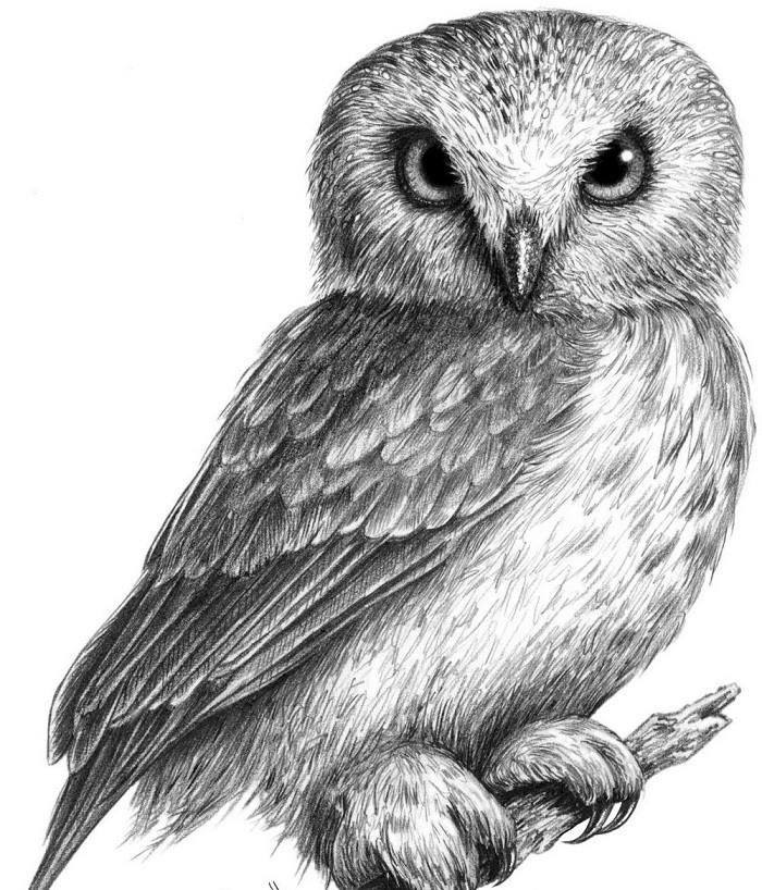 картинка совы чтобы нарисовать всегда пытался добиться