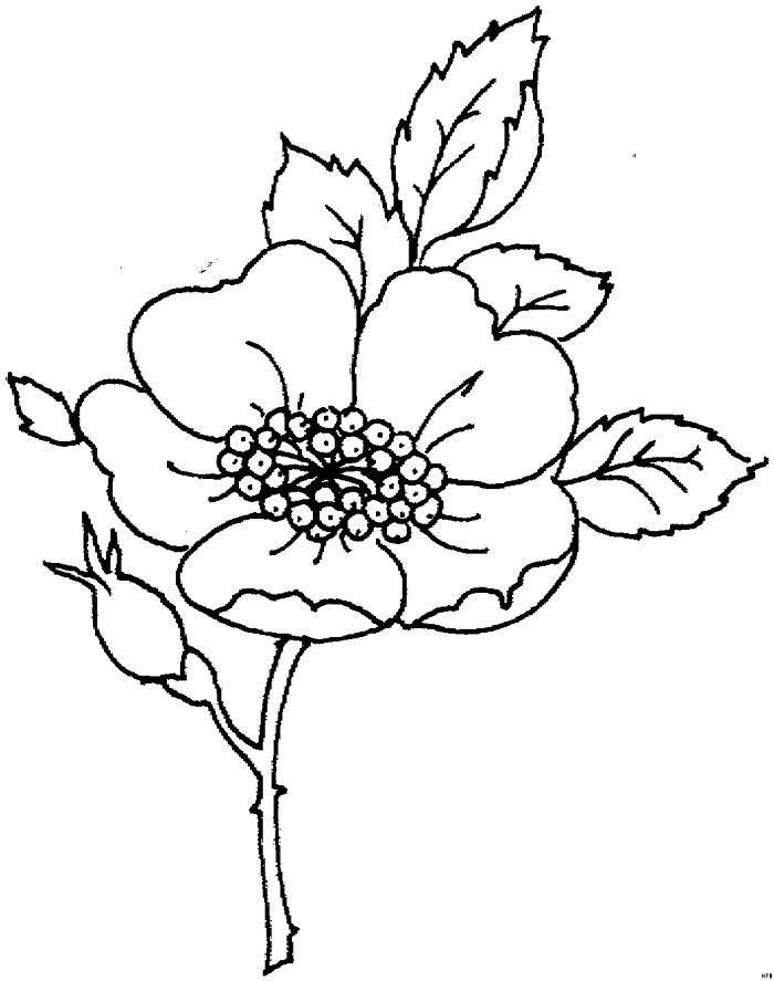 наверное картинки для выжигания цветы легко зеленый пластилин лепим