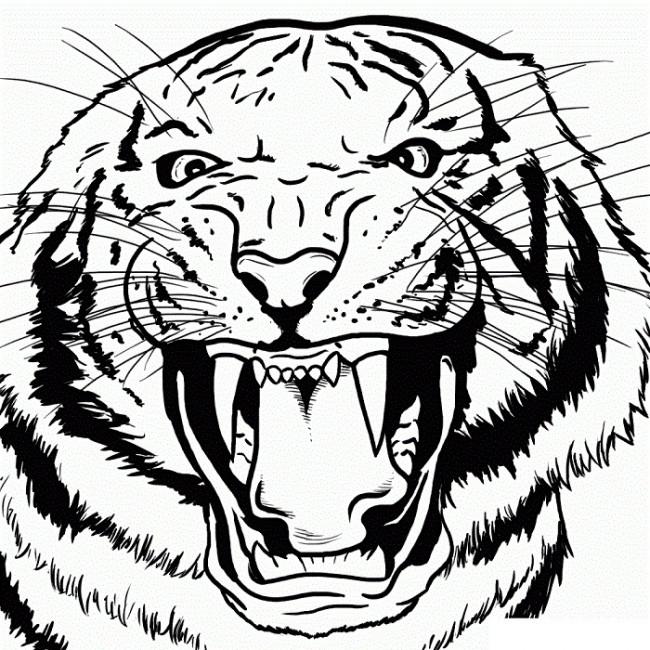 Картинки белого тигра для срисовки, анимация картинки