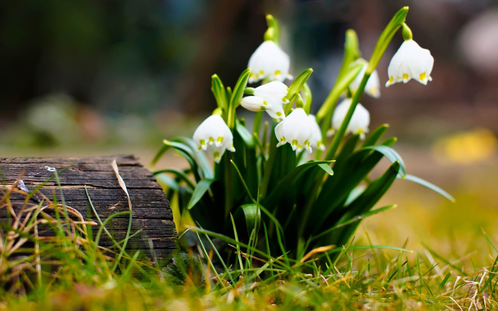 Картинки весна природа цветы на рабочий стол