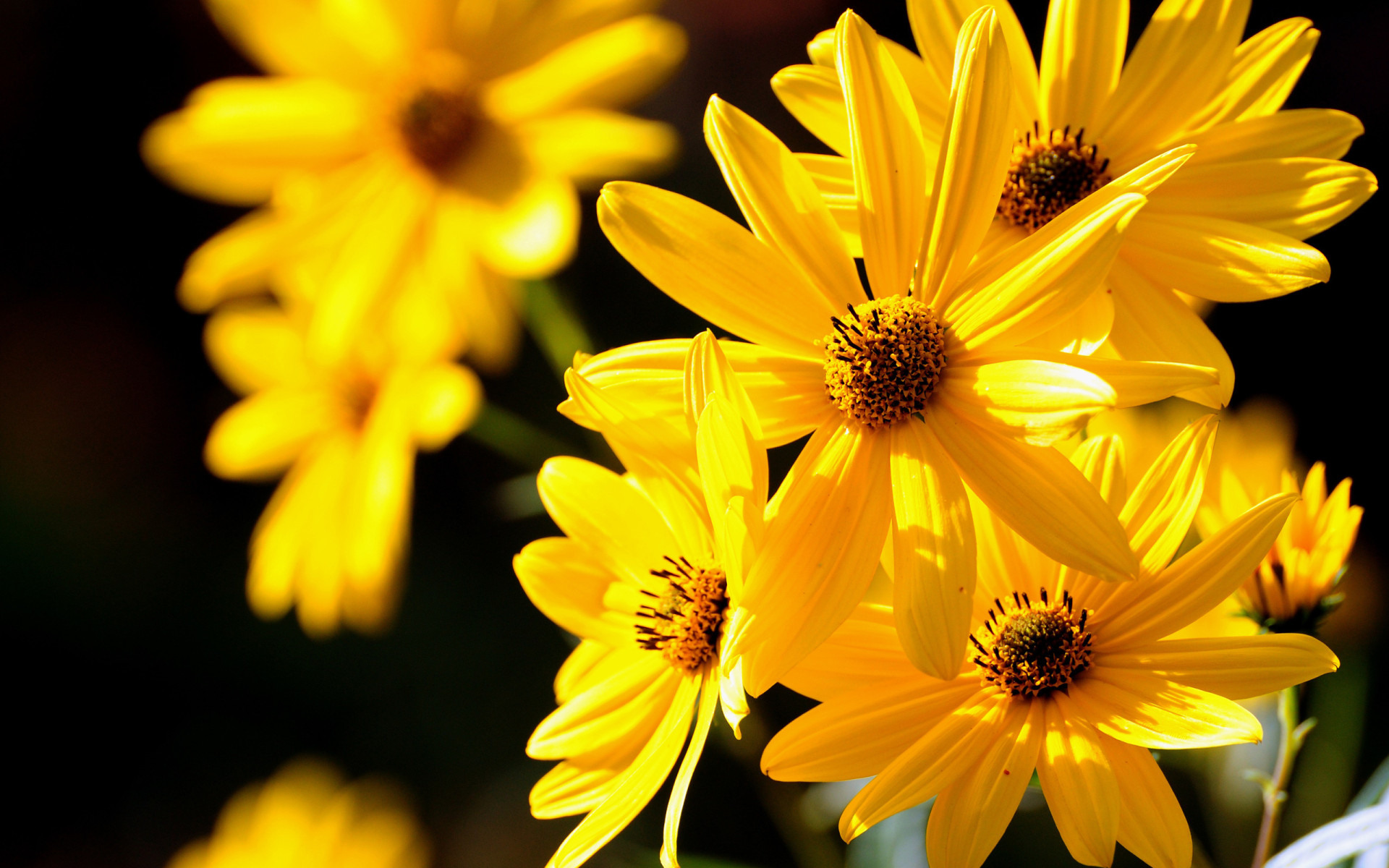 Картинки на телефон с желтым цветом