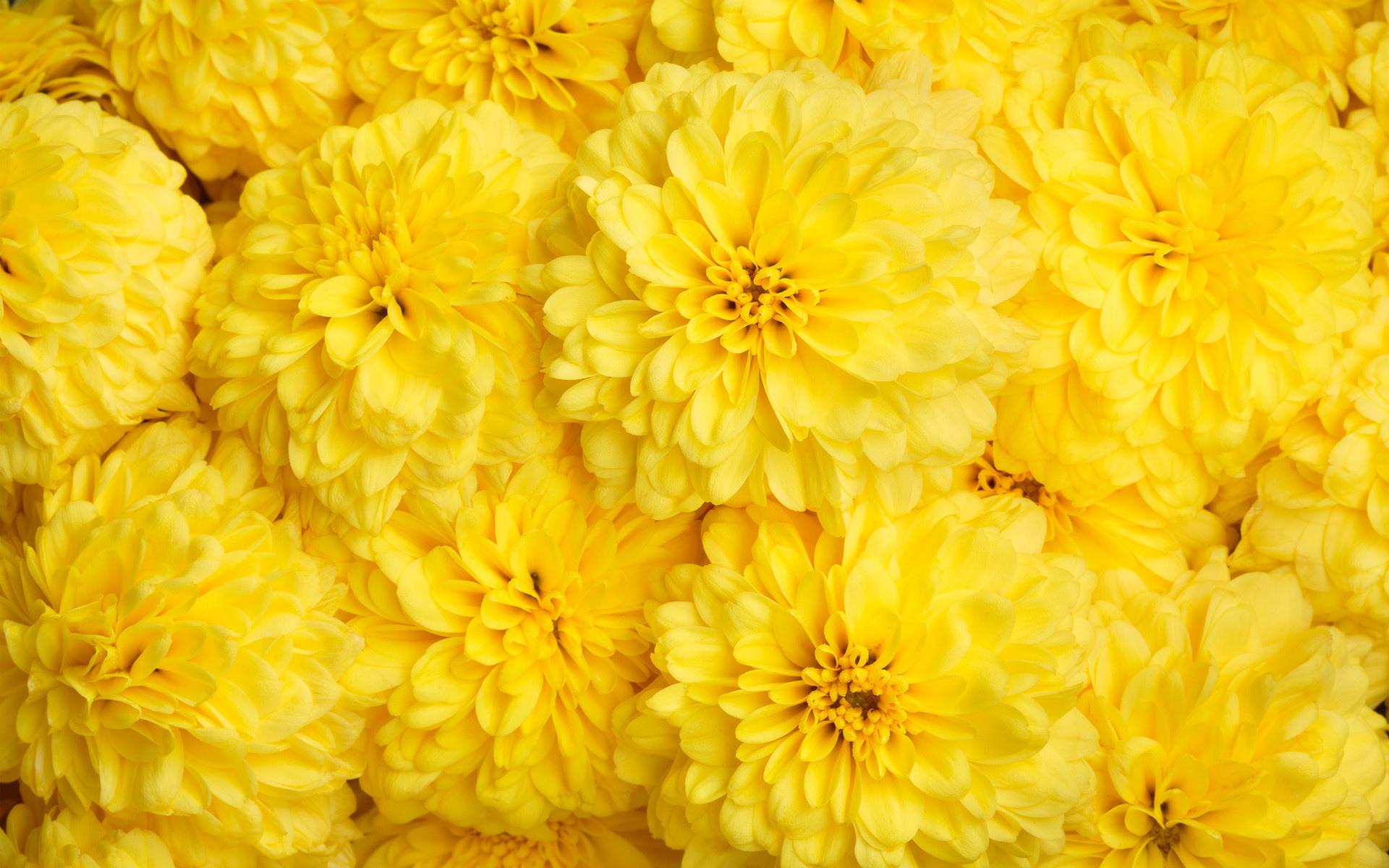 Картинки с желтыми цветом