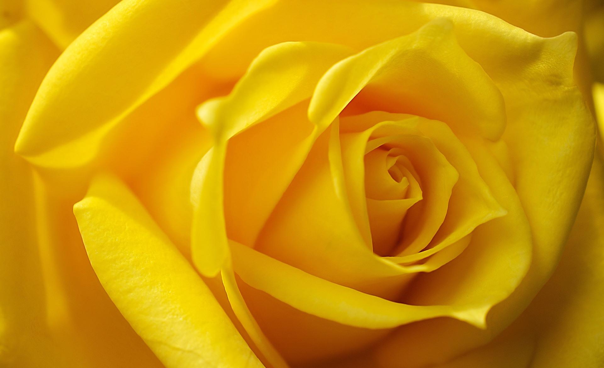 желтые картинки смотреть музыку виа