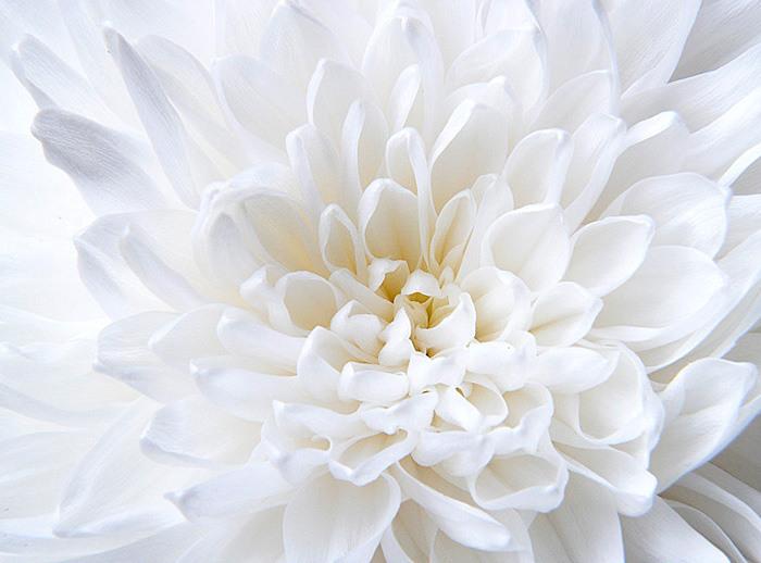 картинки белый цвет