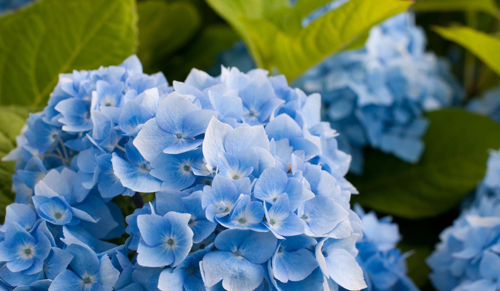 развала основном фотографии синих цветов дом области
