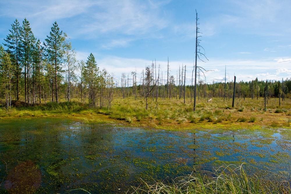 туда, великое болото фото вологодская область хотите провести