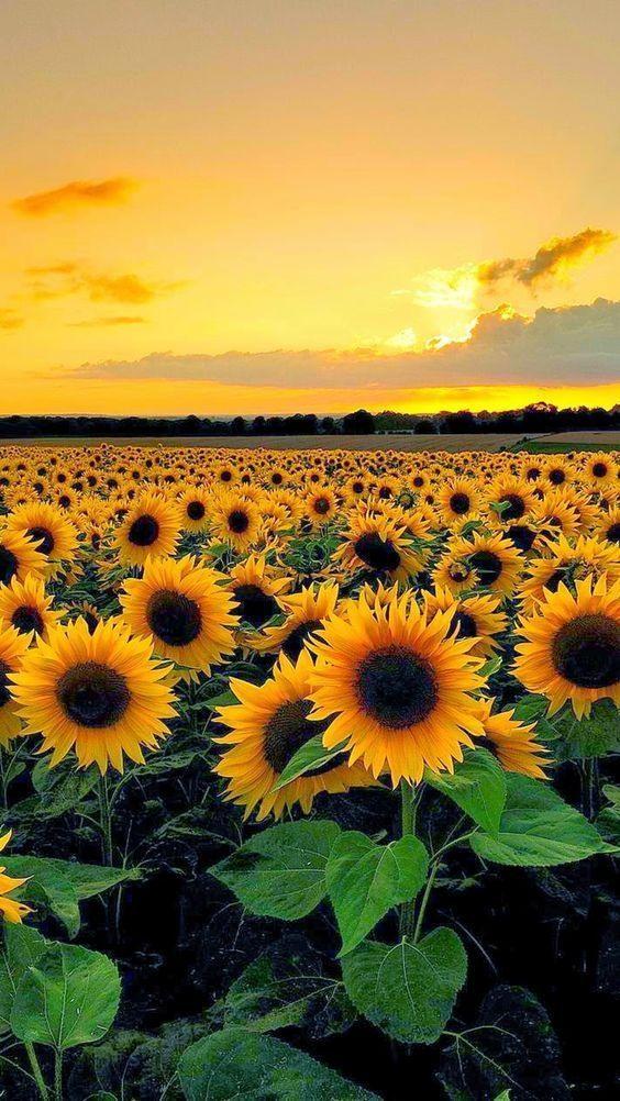 Картинки лето на заставку телефона (50 фото) • Прикольные ...  Обои на Телефон Цветы