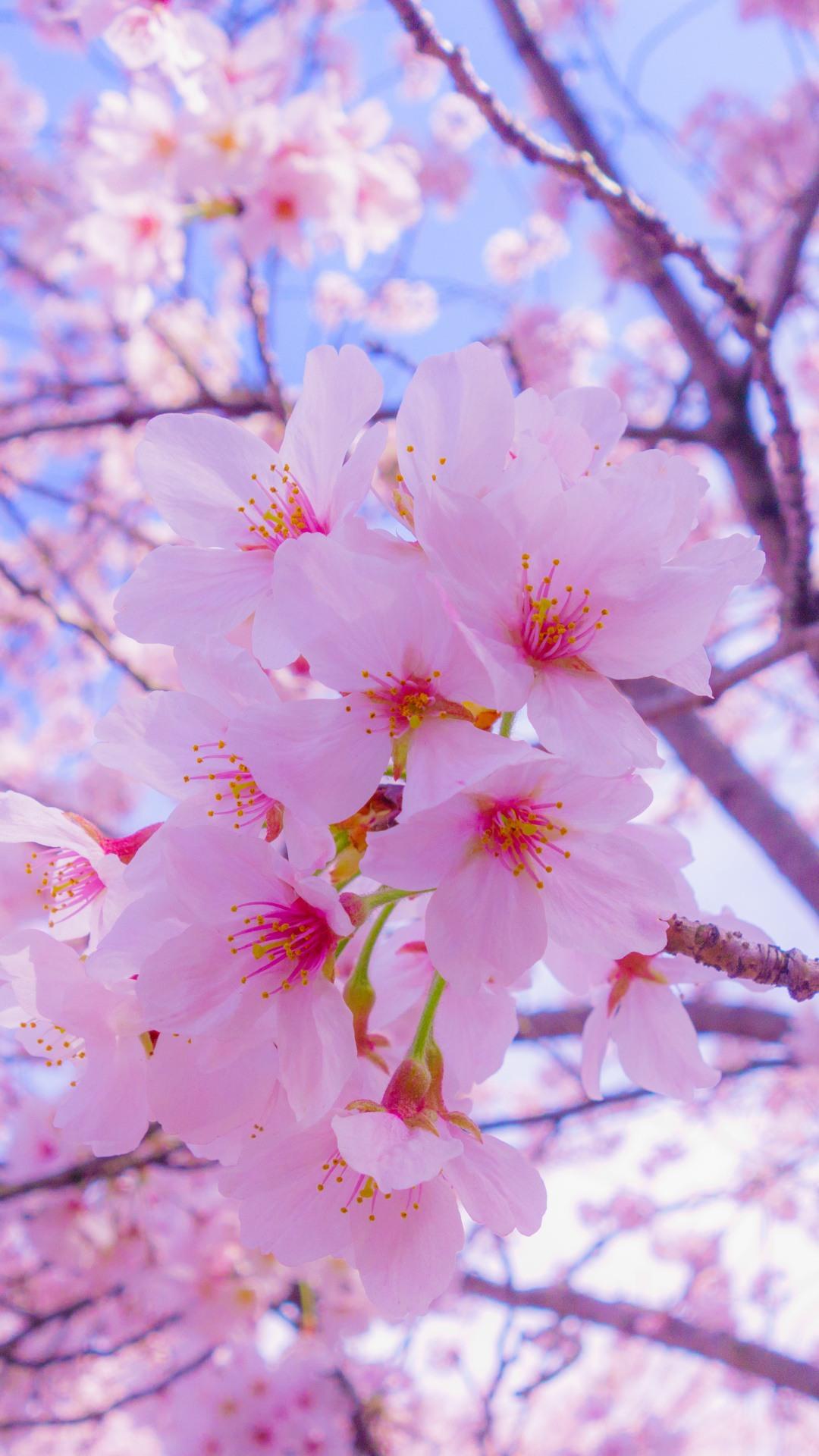 Картинки весна на заставку телефона (47 фото) • Прикольные ...  Обои на Телефон Цветы
