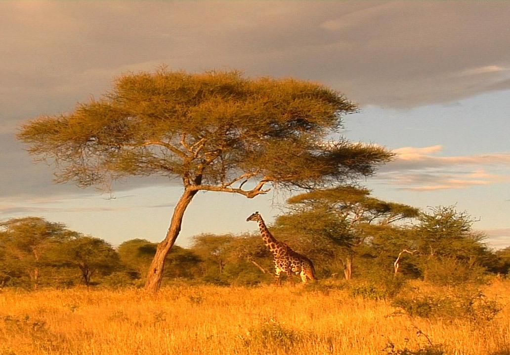 Африка в фото и картинках