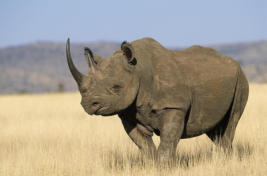 Картинки африканских животных с названиями