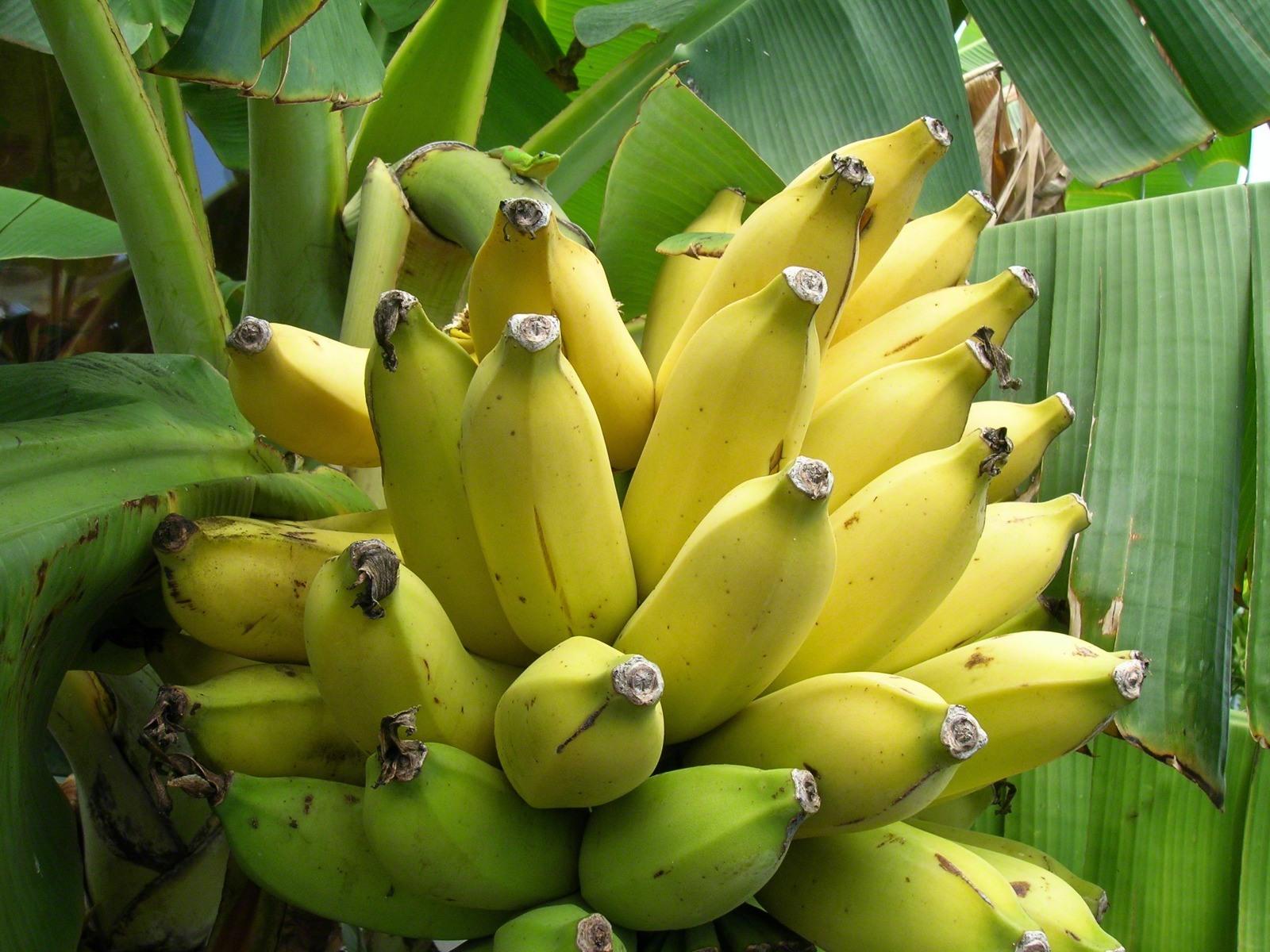 Картинки красивые бананов