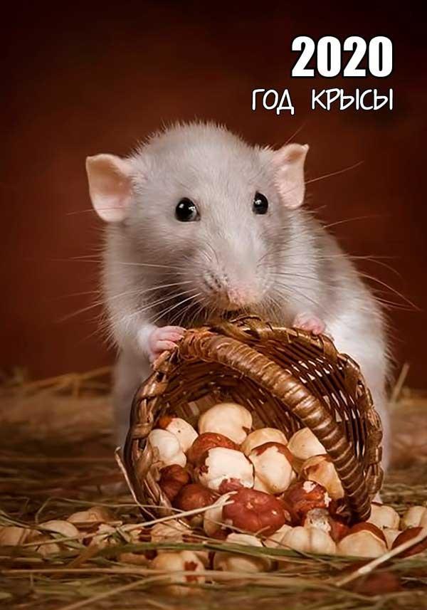 страна прикольные картинки года белой крысы книжки