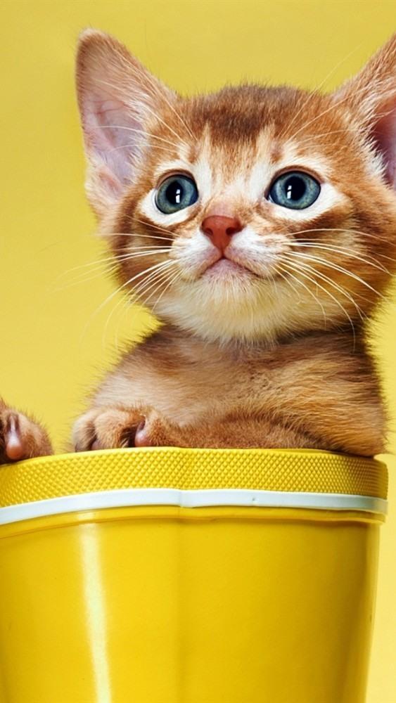 Самые пушистые котята в мире фото удалить