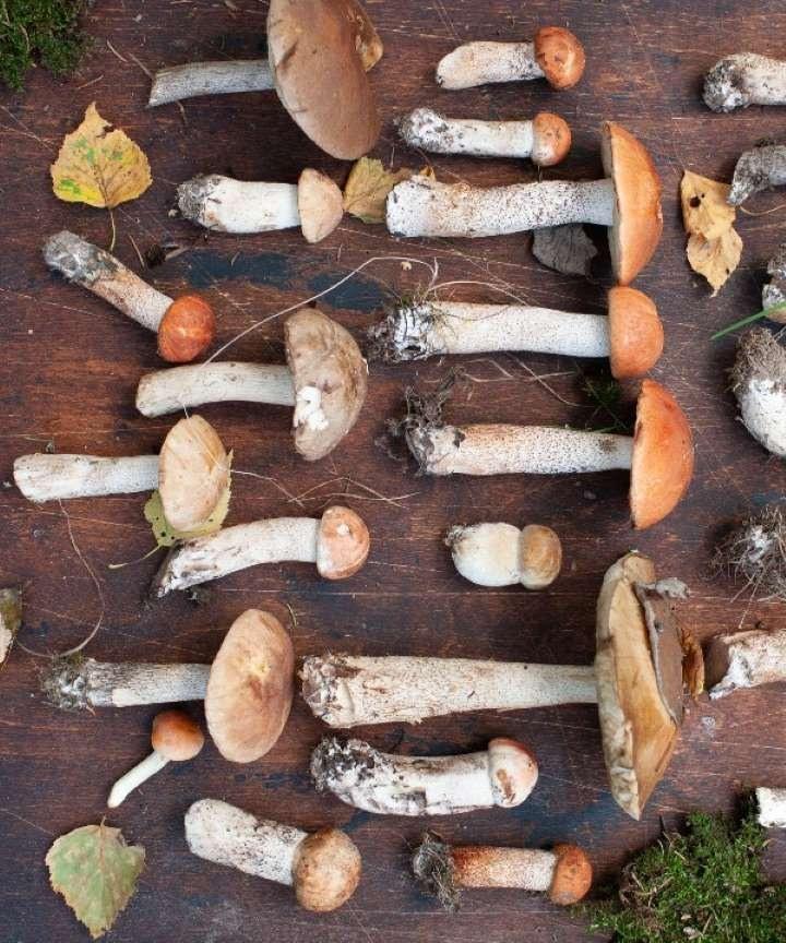 грибы в картинках италии ему