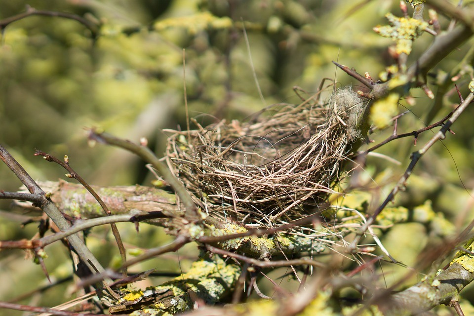 фото картинки гнезда птиц только именно