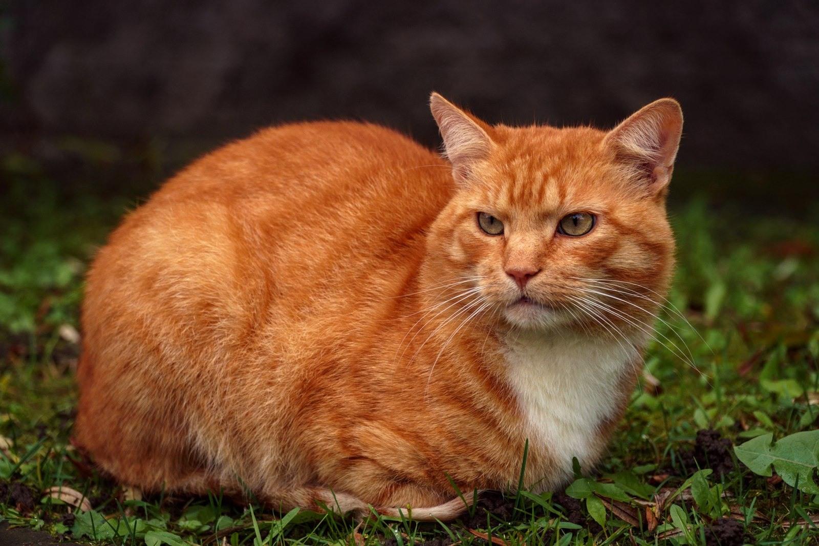 Картинки рыжих котов (25 фото) • Прикольные картинки и позитив